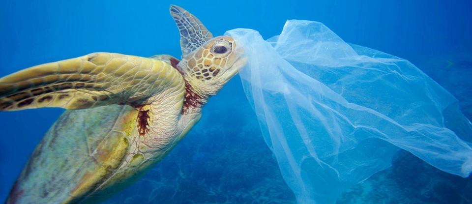 Unsere Spende an WWF Deutschland gegen die Plastikflut. (© WWF/Troy Mayne)